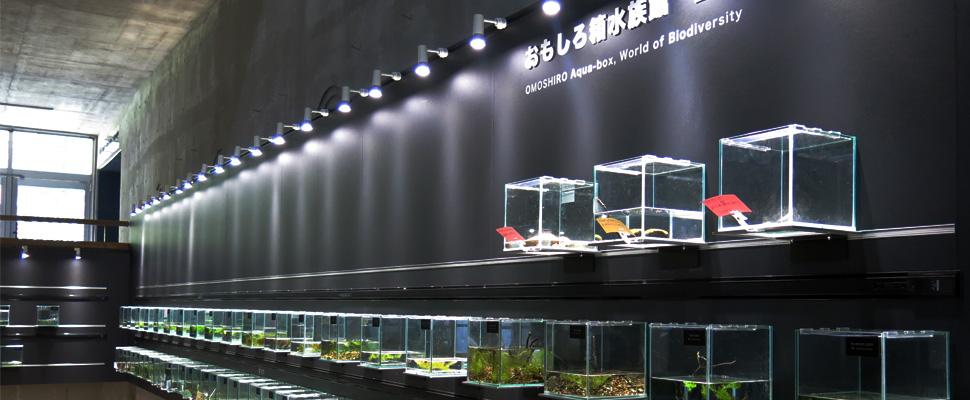 おもしろ箱水族館・生物多様性の世界コーナーの写真