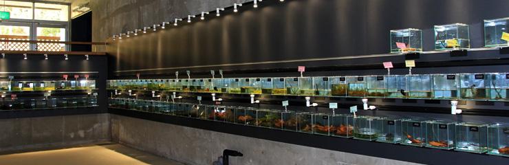 おもしろ箱水族館コーナーの水槽の写真
