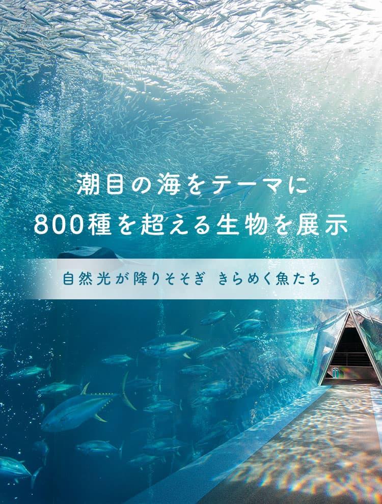 潮目の海をテーマに800種を超える生物を展示