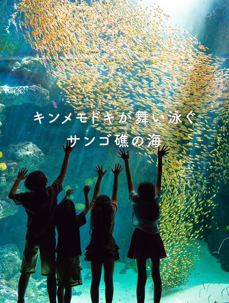 キンメモドキが舞い泳ぐサンゴ礁の海