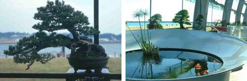 盆栽と金魚のコラボレーション