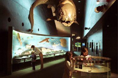 海・生命の進化