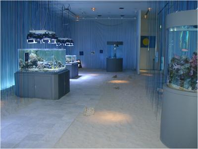 2004年7月15日 企画展「ALII Palau!黒潮源流の海」