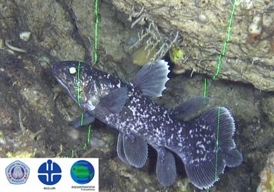 2009年10月6日 世界初!シーラカンス稚魚発見