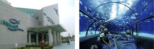 上海海洋館