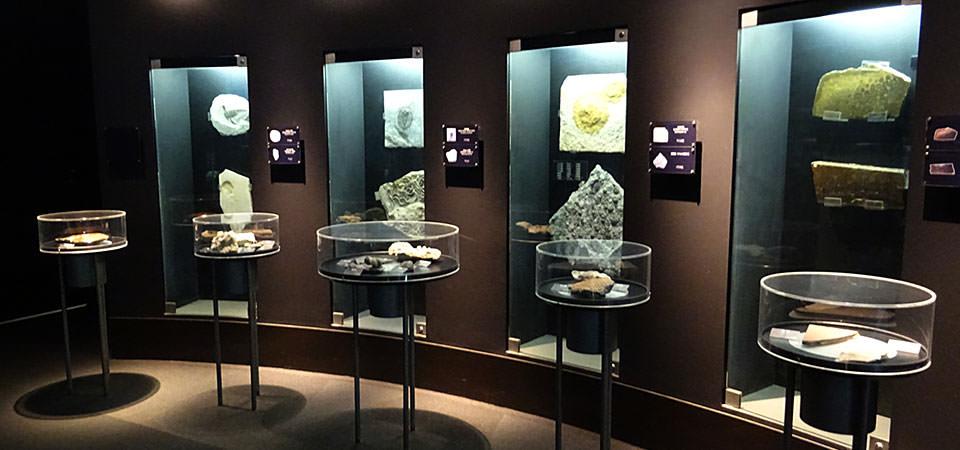 海・生命の進化の展示風景2