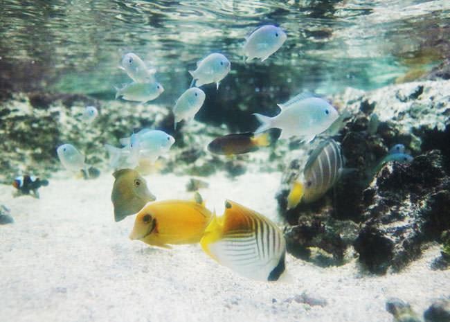 パラオの海の生き物