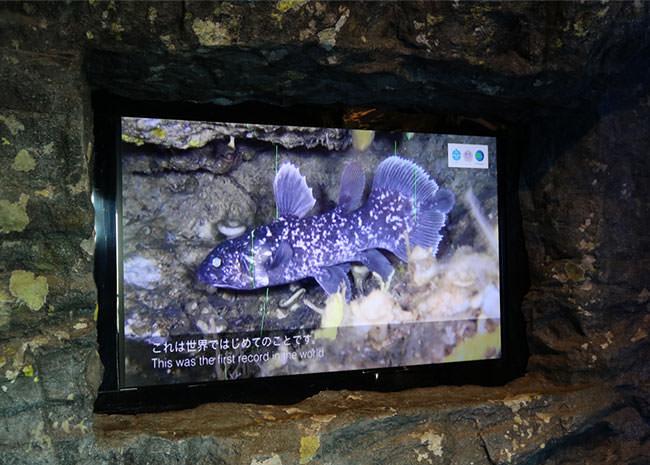 シーラカンスの稚魚の映像