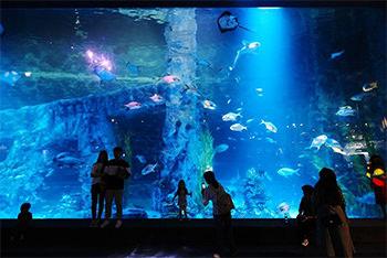 ロッテワールド水族館内の写真