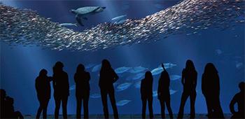 モントレー湾水族館内写真