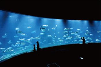 葛西臨海水族園内の写真