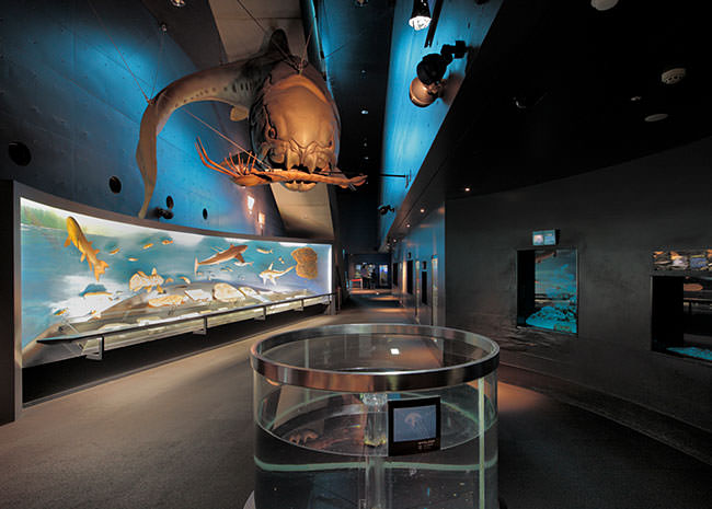 展示「海・生命の進化」