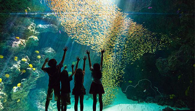展示「サンゴ礁の海」