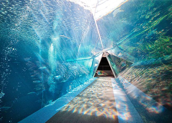 展示「潮目の大水槽」