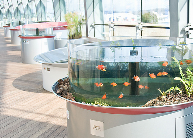生きた芸術・金魚の水槽