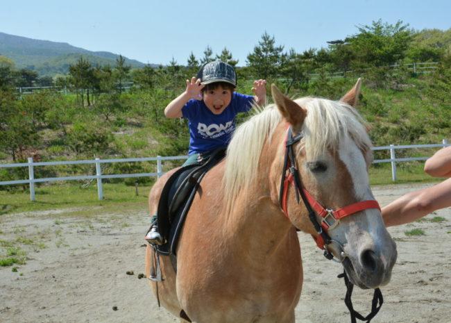 ハーフリンガーの引き馬体験