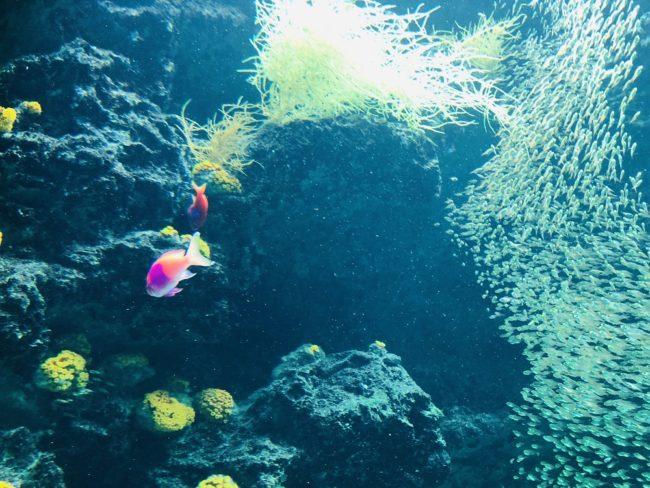 サンゴ礁の海(るるぶ提供)