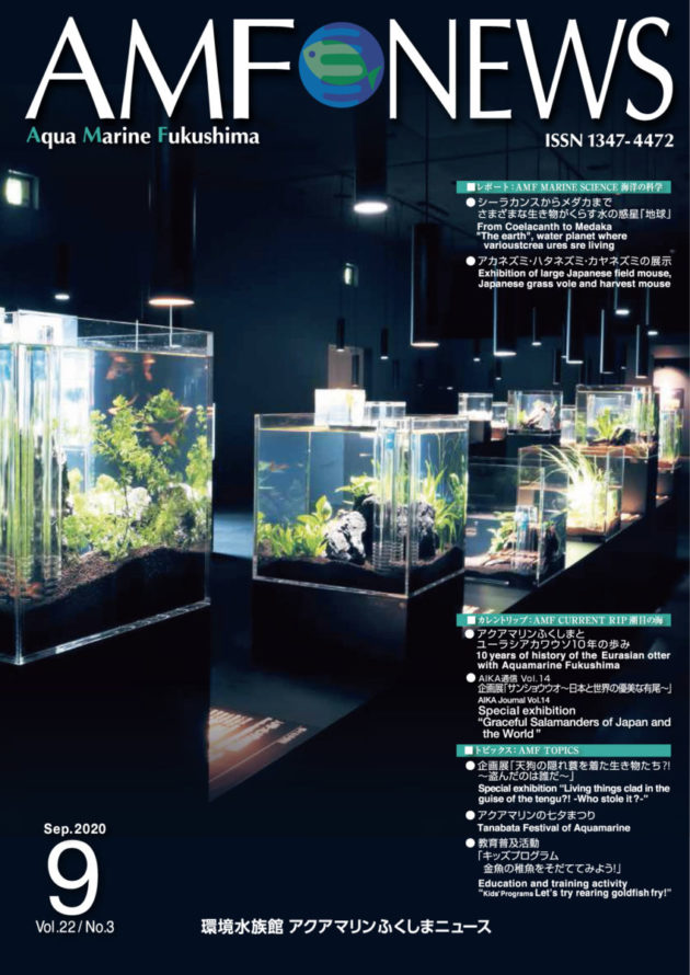 amf_news82cover
