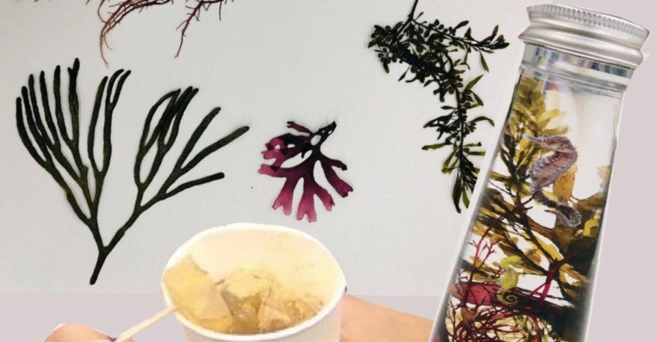 海藻プログラム