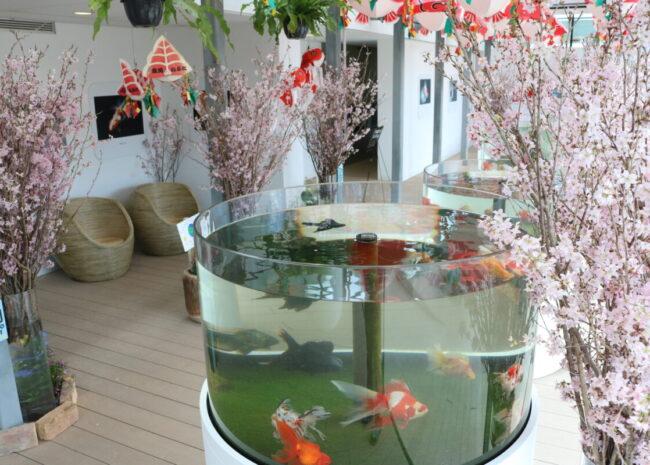 金魚館展示イメージ
