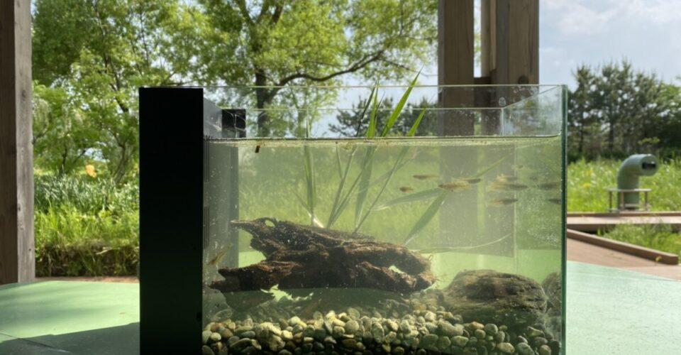 BIOBIOかっぱの里水槽イメージ