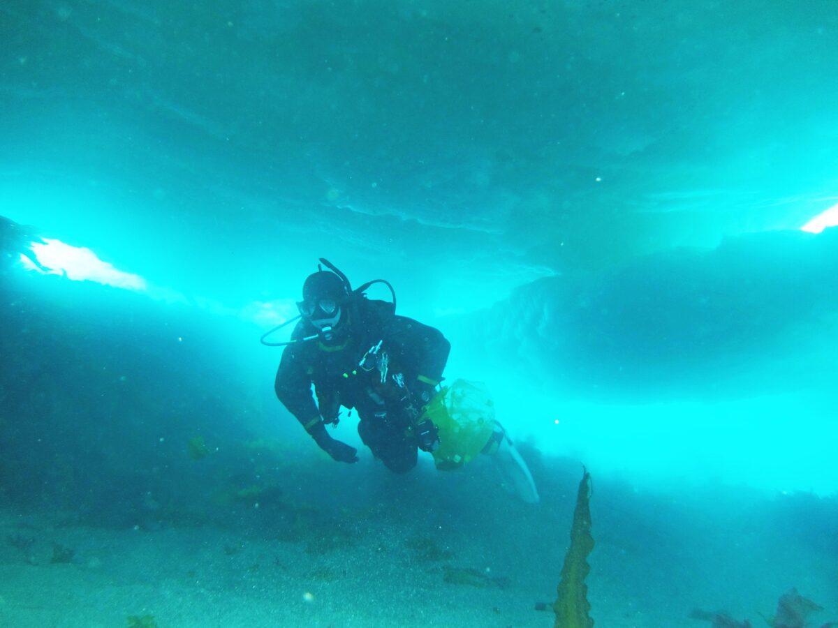 流氷の下採集クリオネ1