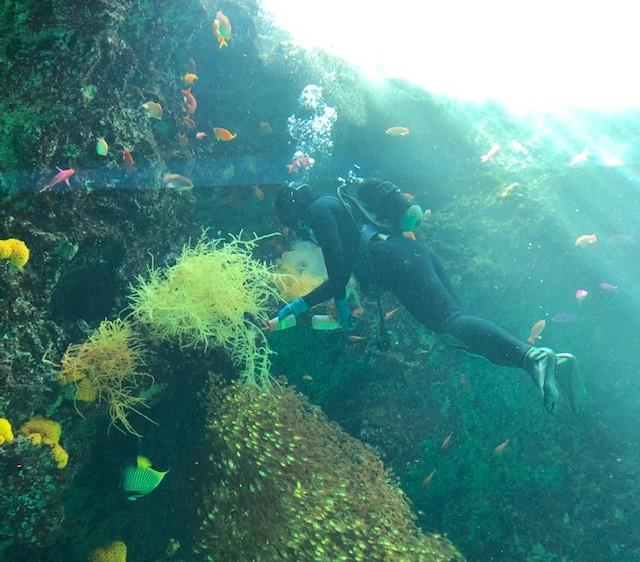 サンゴ礁の海潜水作業